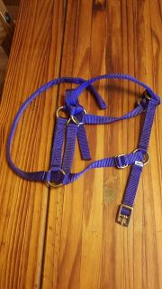 Halter and lead