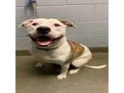 Adopt Remy a Mixed Breed