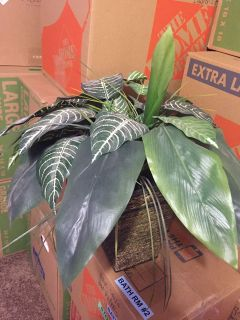 $5 Artificial Plant (could use some dusting)