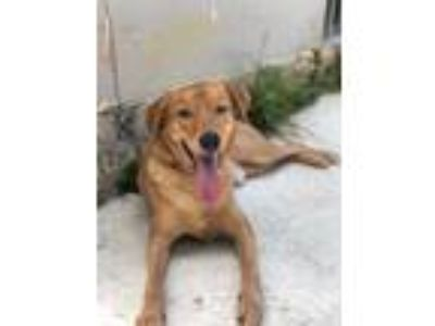 Adopt MORETO a Mixed Breed