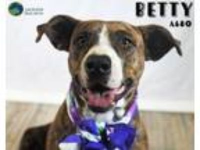 Adopt Betty a Pit Bull Terrier, Black Mouth Cur