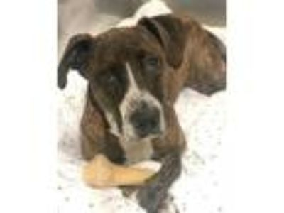 Adopt Diego a Hound, Mixed Breed