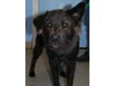 Adopt Smokey 659052 a Black Border Collie / Mixed dog in Hayden, ID (25335391)