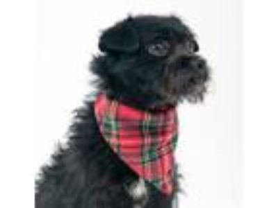 Adopt Jet a Black Terrier (Unknown Type, Small) / Mixed dog in San Francisco