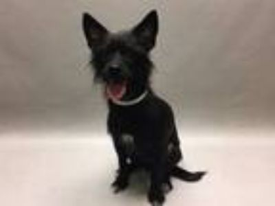 Adopt Diva Las Vegas a Mixed Breed (Small) / Mixed dog in New York