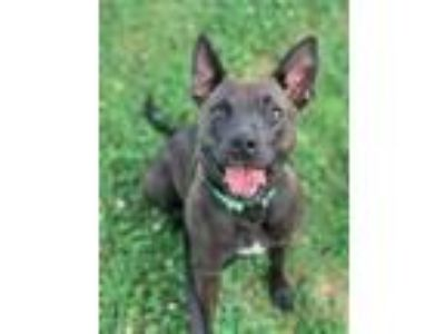 Adopt LOUISE a Catahoula Leopard Dog
