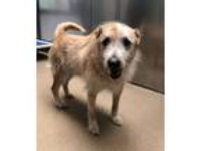 Adopt Tyrone a Terrier