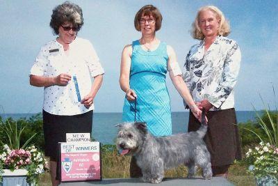 Glen of Imaal Terrier Puppies