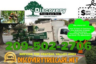 Discovery Tree Care - Affordable Tree Service