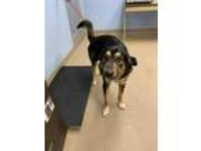 Adopt Larkspur a Black Mixed Breed (Large) / Mixed dog in Chamblee