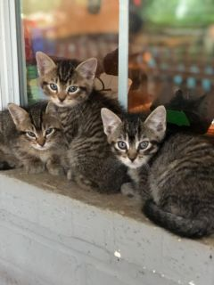 6kittens ready for rehoming.