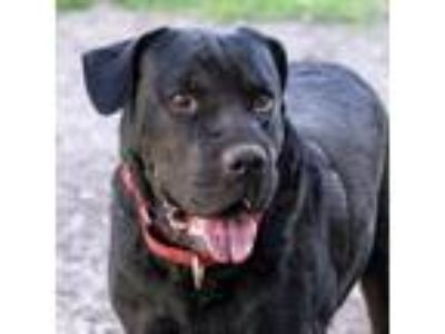 Adopt Boo Boo a Black Shepherd (Unknown Type) dog in Jacksonville, FL (25648204)