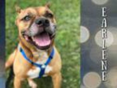 Adopt EARLENE a Boxer, Mixed Breed