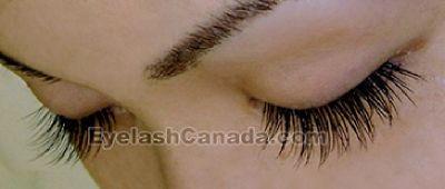 Toronto Single Eyelash Training