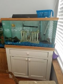 55 gallon aquarium
