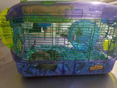 Two dwarf winter white hamsters with cage