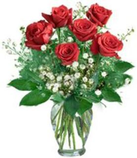 Send Fresh ROSES Order Toll Free Call 1 877 626-1056