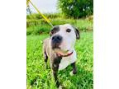 Adopt Queen a Mixed Breed