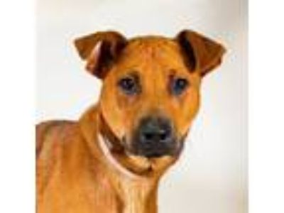 Adopt Canon a Hound (Unknown Type) / Mixed dog in Houston, TX (25884952)