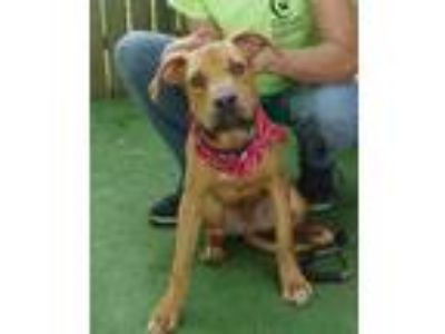 Adopt Stray-hickory hill- avail 6-21 a Black Hound (Unknown Type) / Mixed dog in