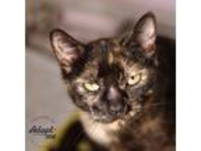 Adopt Kerri a Tortoiseshell Domestic Shorthair (short coat) cat in Lyons