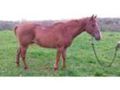Price Drop Pasture Pal or RIding Horse Sale or Trade