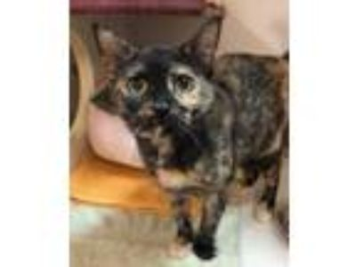 Adopt Luna a All Black Domestic Shorthair / Domestic Shorthair / Mixed cat in