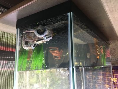 Fish aquarium/pump/heater/led lights/fish