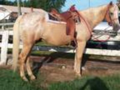 Child freindly palomino trail horse for sale