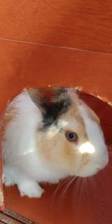 3 year old rabbit looking for a new home.