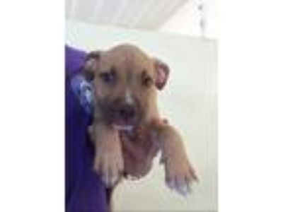 Adopt Idris a Terrier (Unknown Type, Small) / Mixed Breed (Medium) / Mixed dog