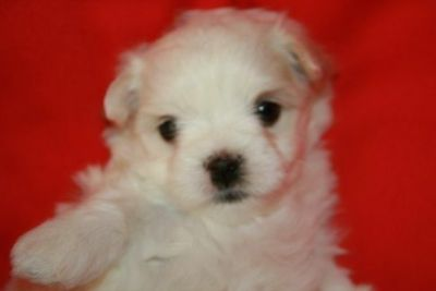 Craigslist Animals And Pets For Adoption Classified Ads In Davis