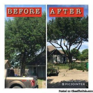 Toledo Tree Service
