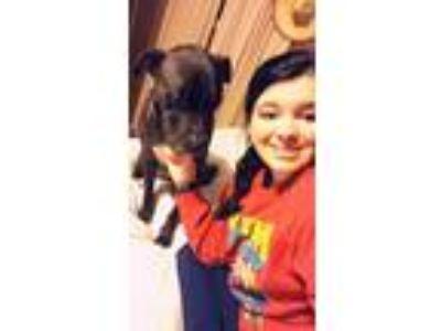 Adopt Ortiz a Black - with White Terrier (Unknown Type, Medium) dog in