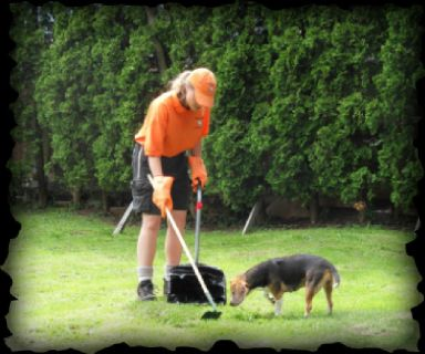 Best Dog Poop Service By Ecoscoopers