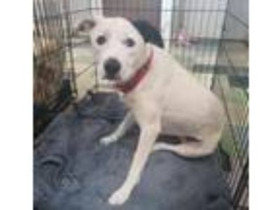 Adopt Los Teques `Ghost` a Border Collie, Mixed Breed
