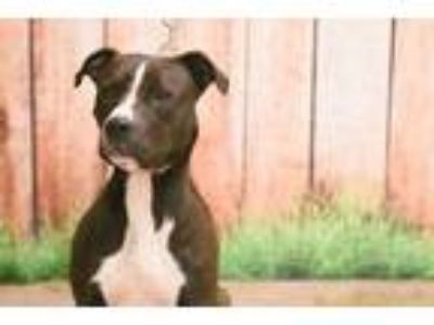 Adopt Bizzle a Black Mixed Breed (Large) / Mixed dog in New Castle