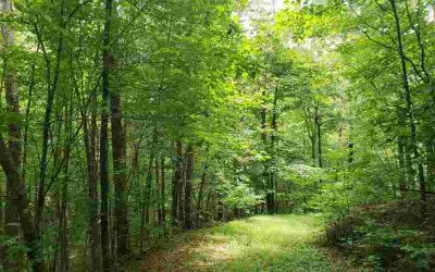 Lt 25 Clear Creek Valley Ellijay, Looking For Property With