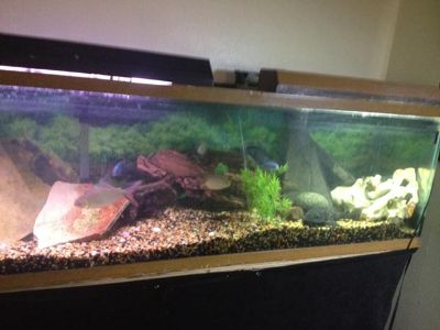 Bird cage, 4 fish tanks ranging from 7 to 100 gallons