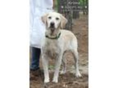 Adopt Arlene & Carmella a Labrador Retriever / Labrador Retriever / Mixed dog in