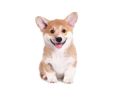 my daughter is corgi OBSESSED right now lol, if anyone has ANYTHING cute corgi related, tag me and let me know!