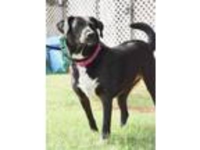 Adopt Twinkle Toes a Black Border Collie / Mixed dog in Norman, OK (22213019)