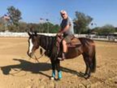Safe Sweet Mare for Lease
