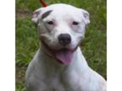 Adopt Frankie (Carol Ann) a White Mixed Breed (Large) / Mixed dog in Middleburg