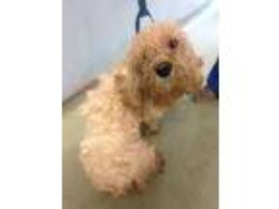 Adopt Timmy a White Terrier (Unknown Type, Small) / Mixed dog in Philadelphia