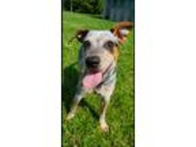 Animals and Pets for Adoption Classifieds in Dansville, New