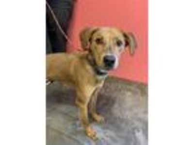 Adopt RICHARD a Plott Hound, Mixed Breed