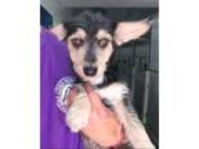 Adopt Rizzo a Terrier (Unknown Type, Small) / Mixed Breed (Medium) / Mixed dog