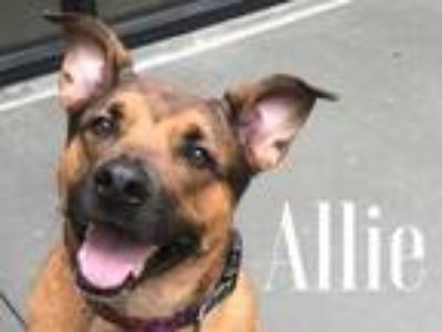 Adopt Allie a Tan/Yellow/Fawn Shepherd (Unknown Type) / Mixed dog in Lewisville