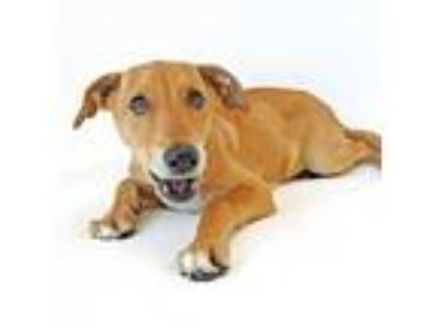 Adopt Dixie a Mixed Breed